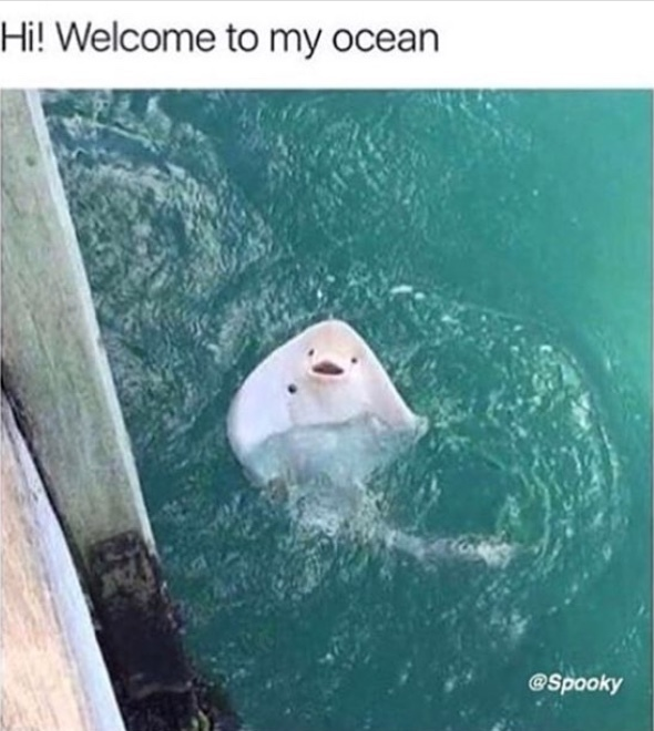 hi welcome to my ocean - meme