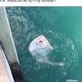 hi welcome to my ocean