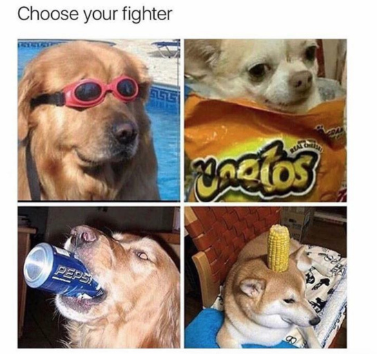 Doggo fighter - meme