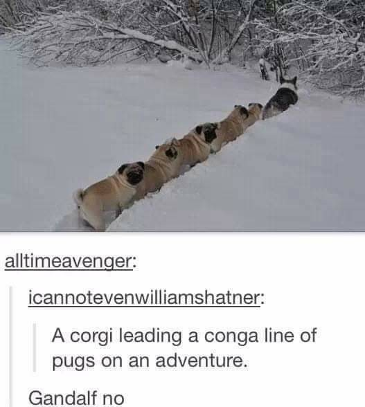 The Fellowship of the Pug - meme