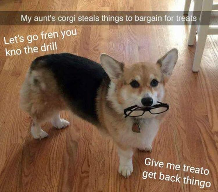 Corggo does a steal - meme