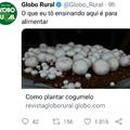 Globo Rural ia Proerd