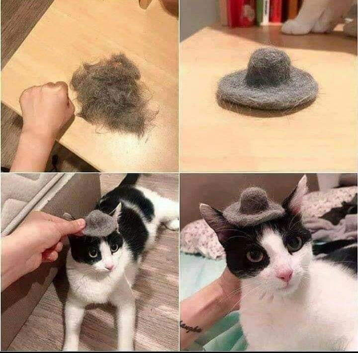 Meow meow Mada faker - meme