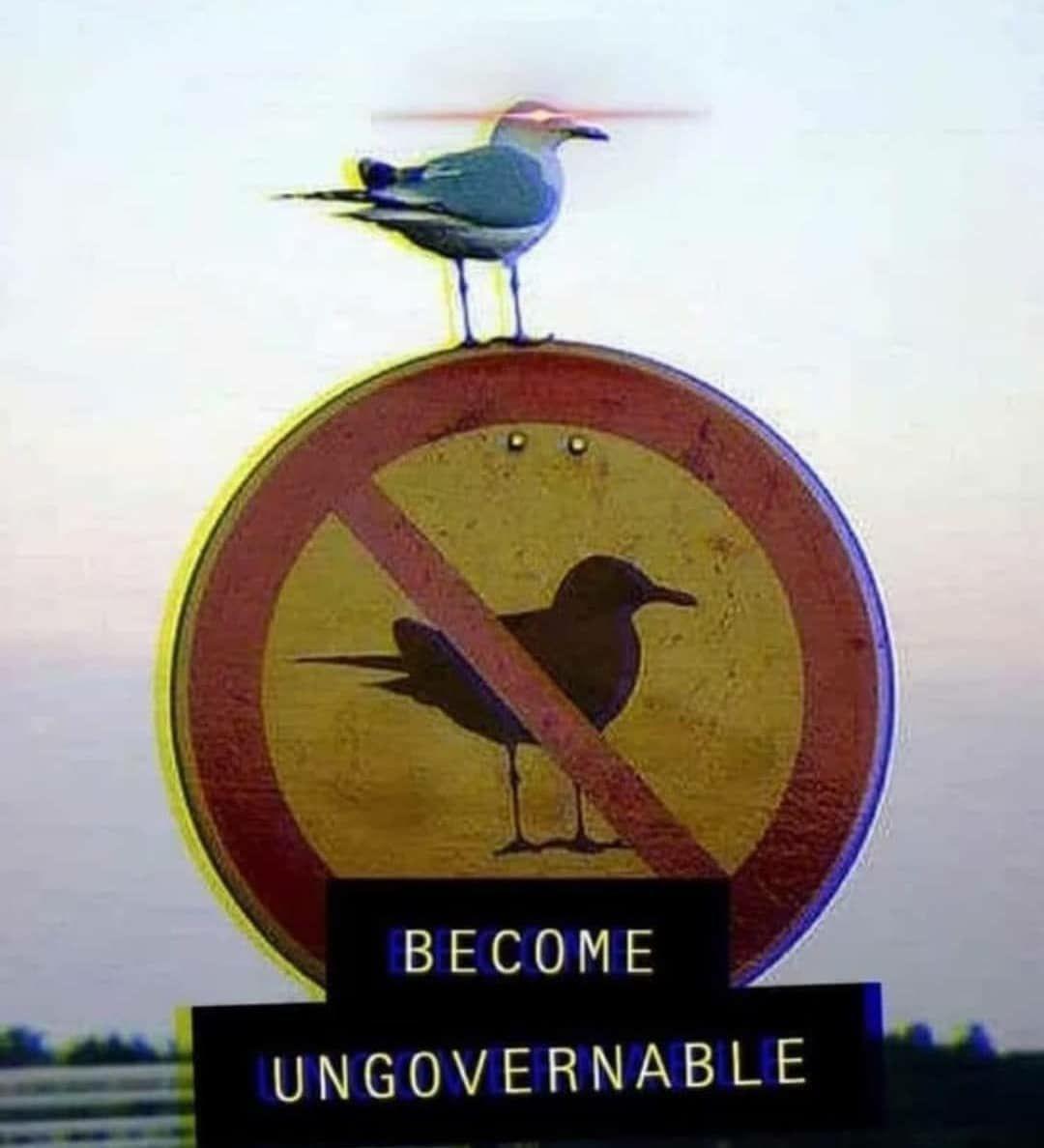 Ungovernable - meme