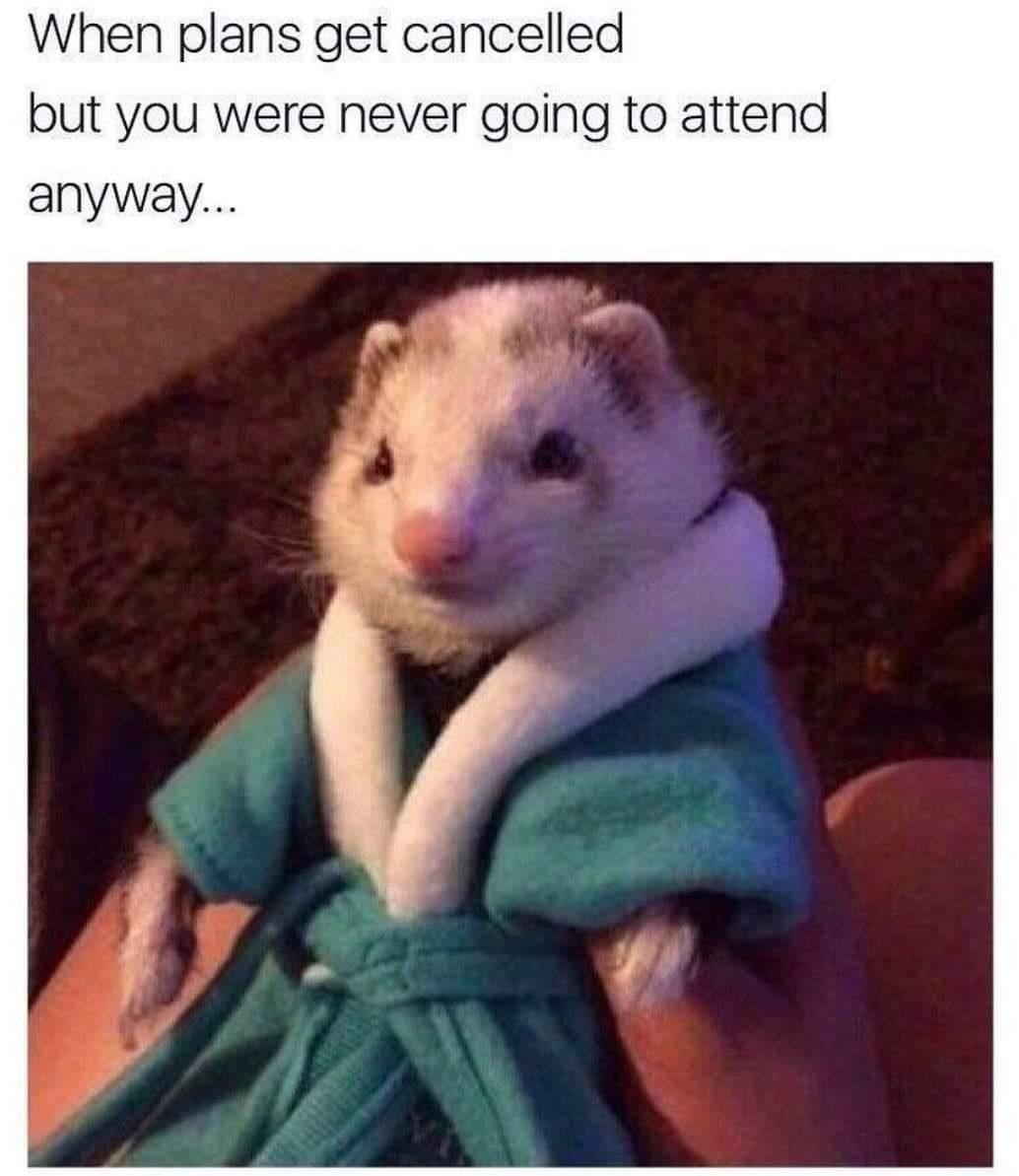 every friday - meme