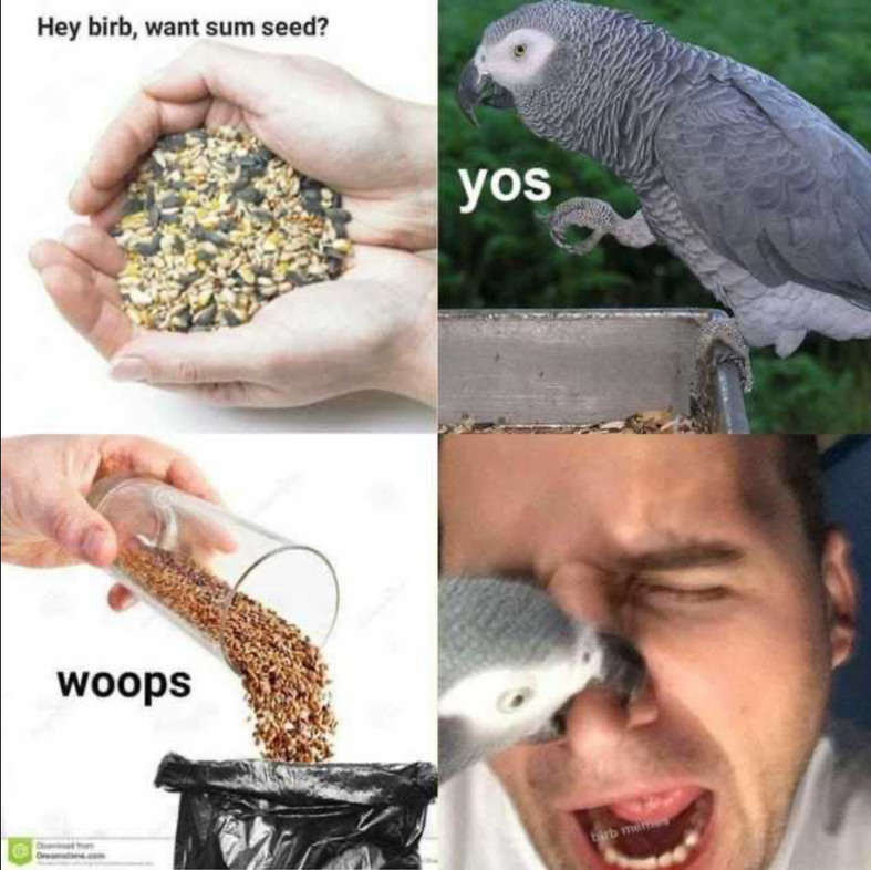 Mean birb - meme