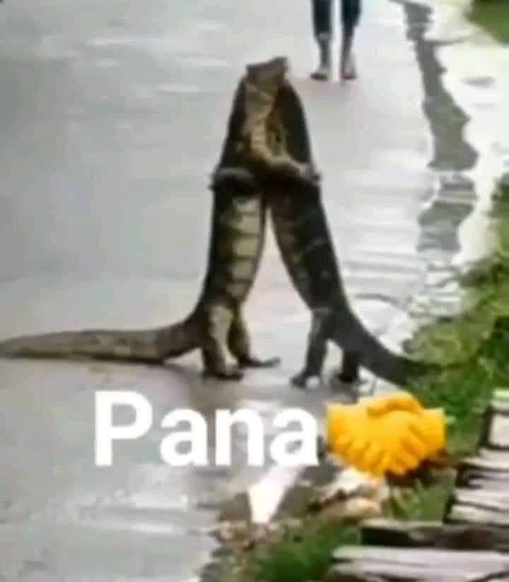 Pana - meme