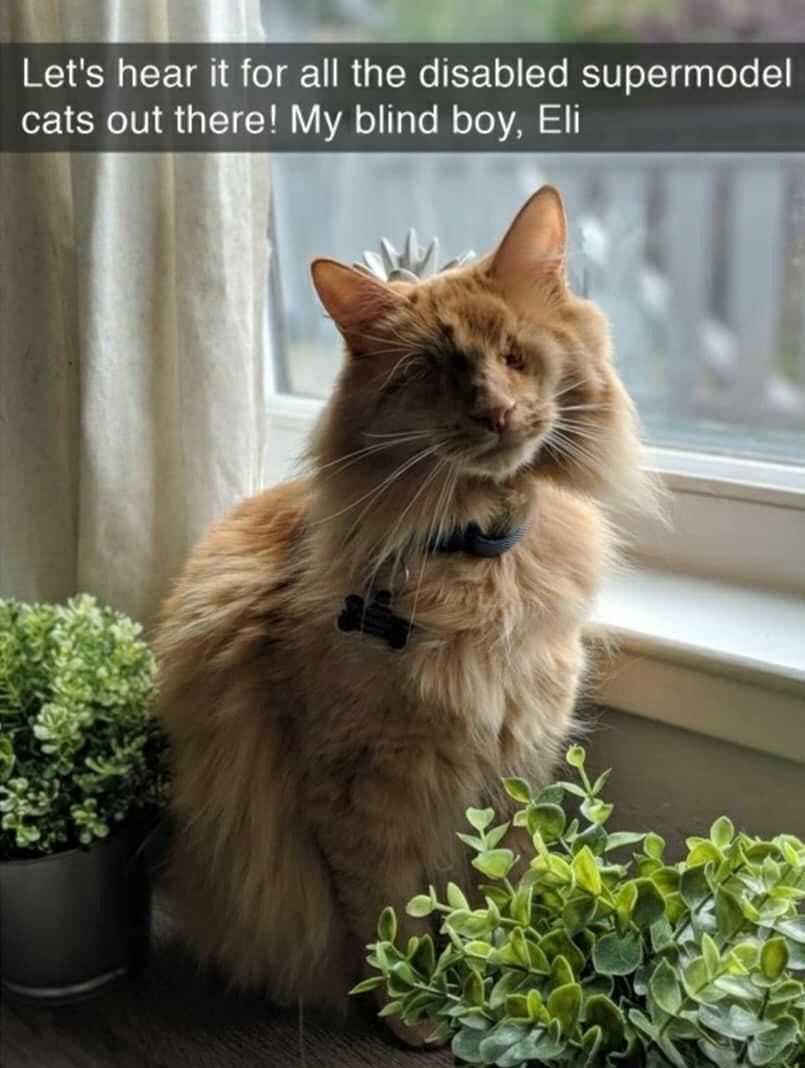 blind cat - meme
