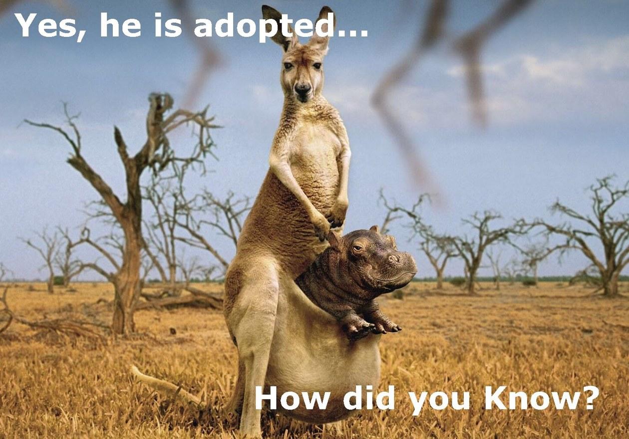 Animal Adoption - meme