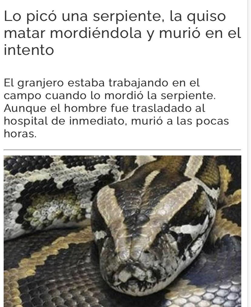 pobre serpiente! no la muerdan - meme
