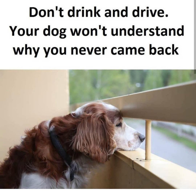 Never drink a drive - meme