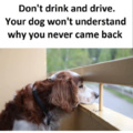 Never drink a drive