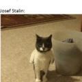 Stalinho esta puto