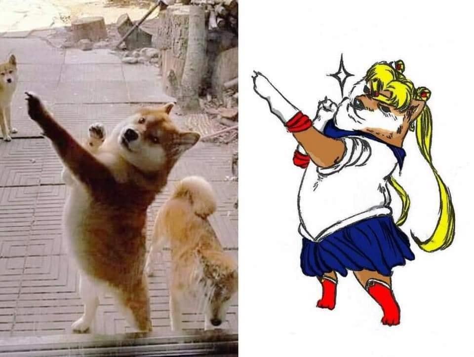 Pinche firulais otaku - meme