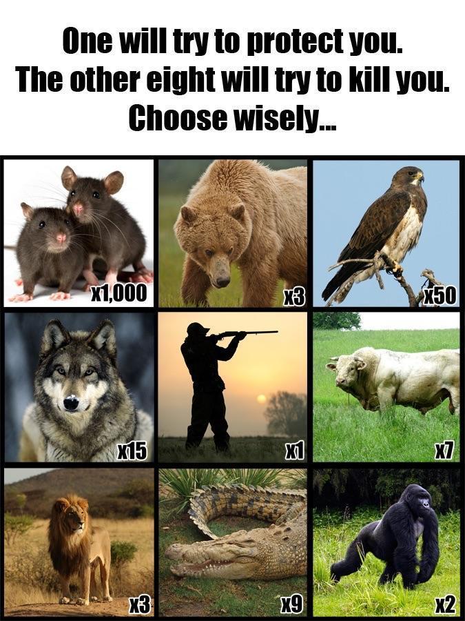 Who do you choose - meme