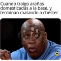 F por chester