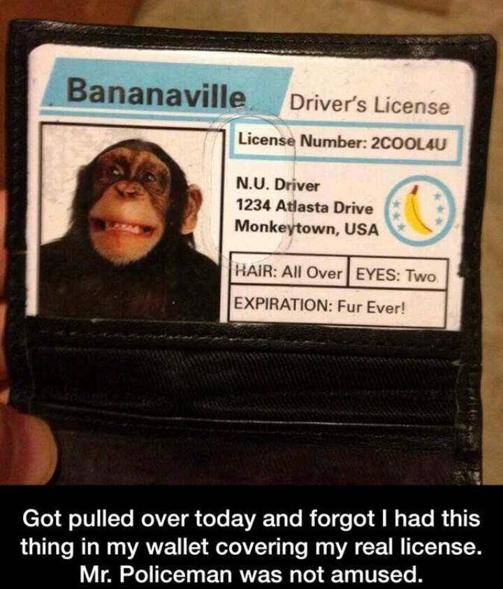 Next Stop, Bananaville - meme
