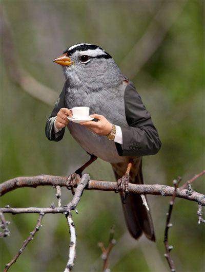 bird - meme