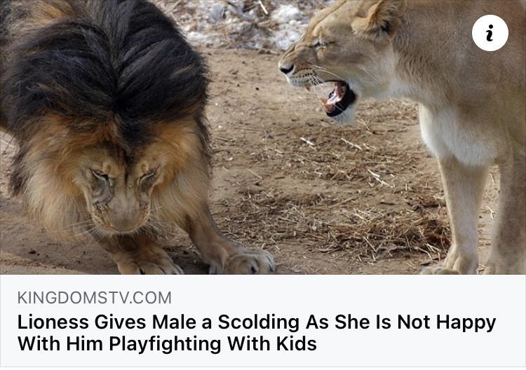 lion - meme