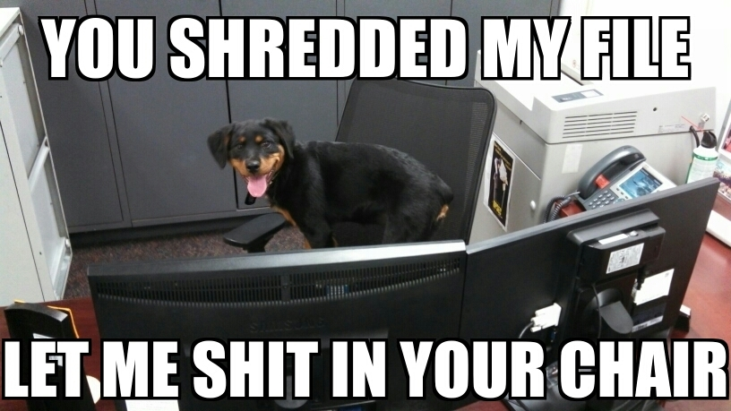 office dog - meme