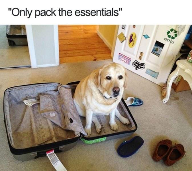 Dog is a need - meme