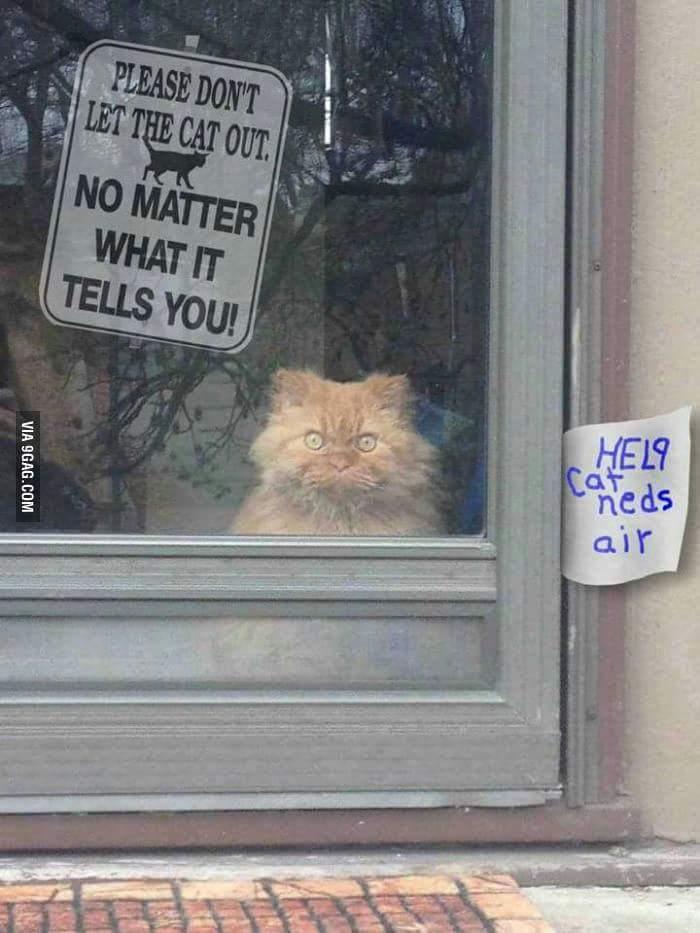 Hmmmm....i gotta help that cat - meme