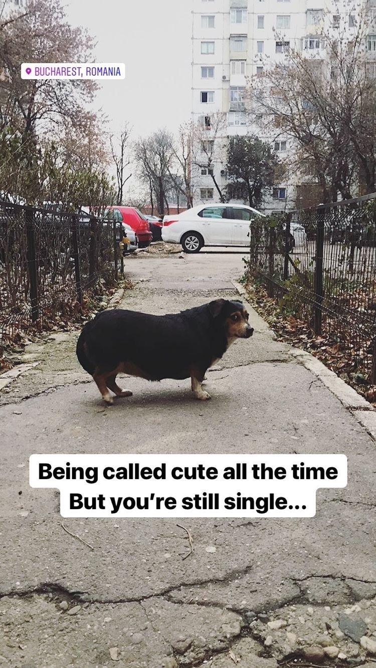 Fatty dog - meme