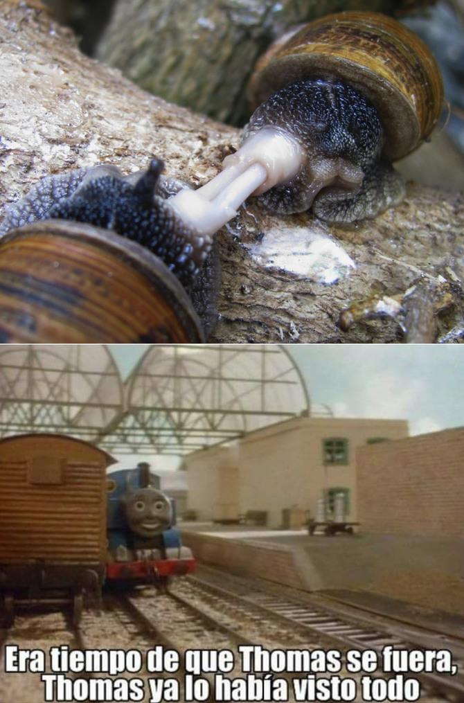 La extraña reproducción de los caracoles - meme