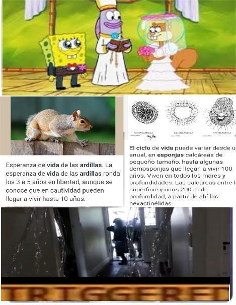 Wowowowwoowow wow - meme
