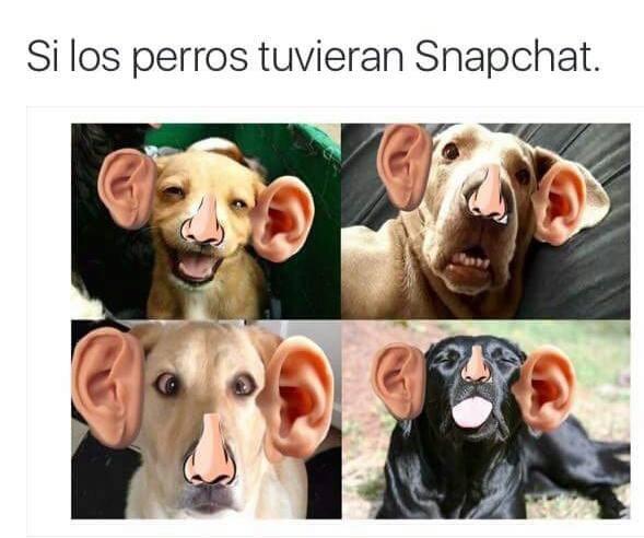 snapchat para perros xd - meme