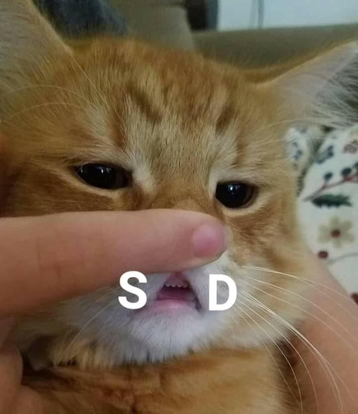 Awww, poor kitty - meme