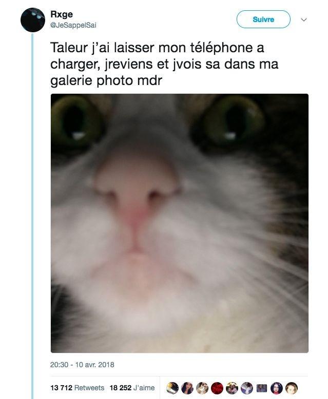 Selfcat - meme