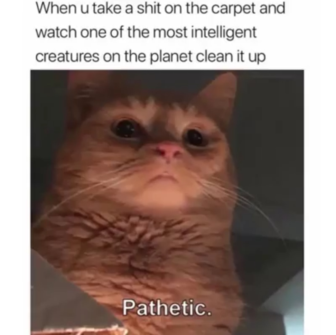 Your cat is your master - meme
