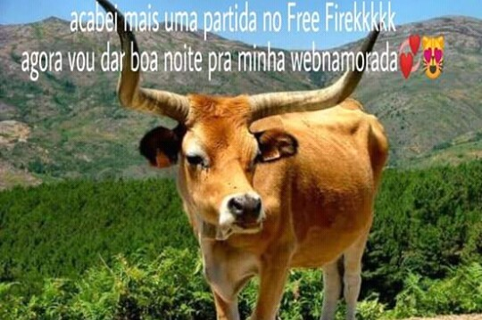 Fogo livre é td corno - meme
