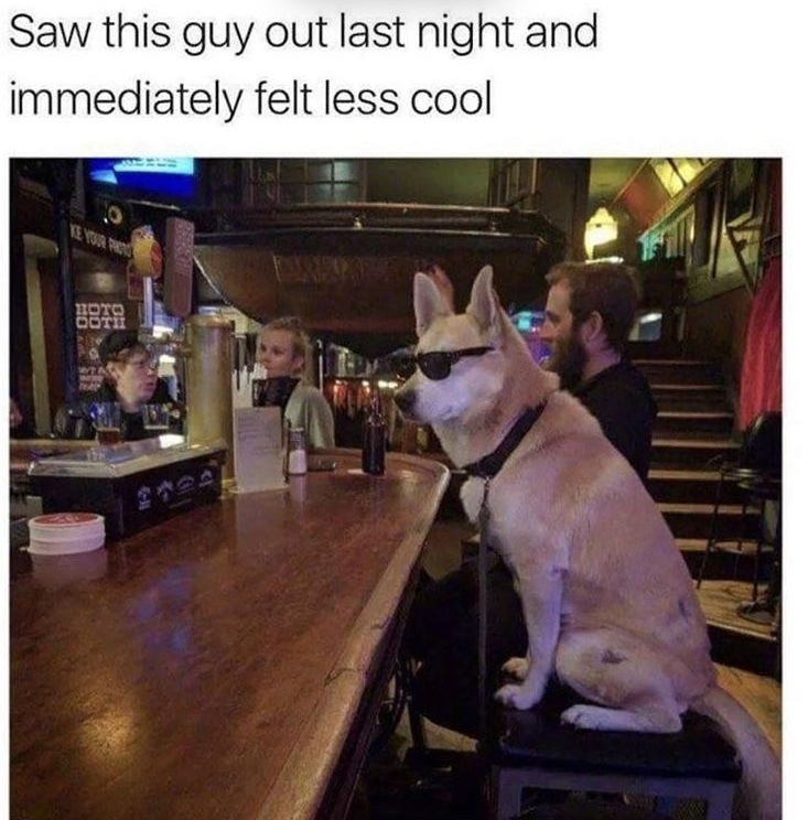 coolest guy in the bar - meme