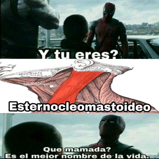 Esternocleomastoideo - meme