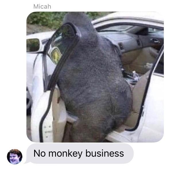 no monkey business - meme