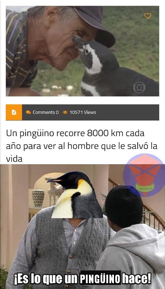 ES LO QUE UN PINGÜINO HACE! - meme