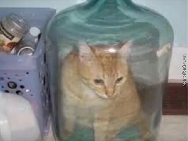 cat in water jug...HOW? - meme