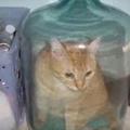 cat in water jug...HOW?