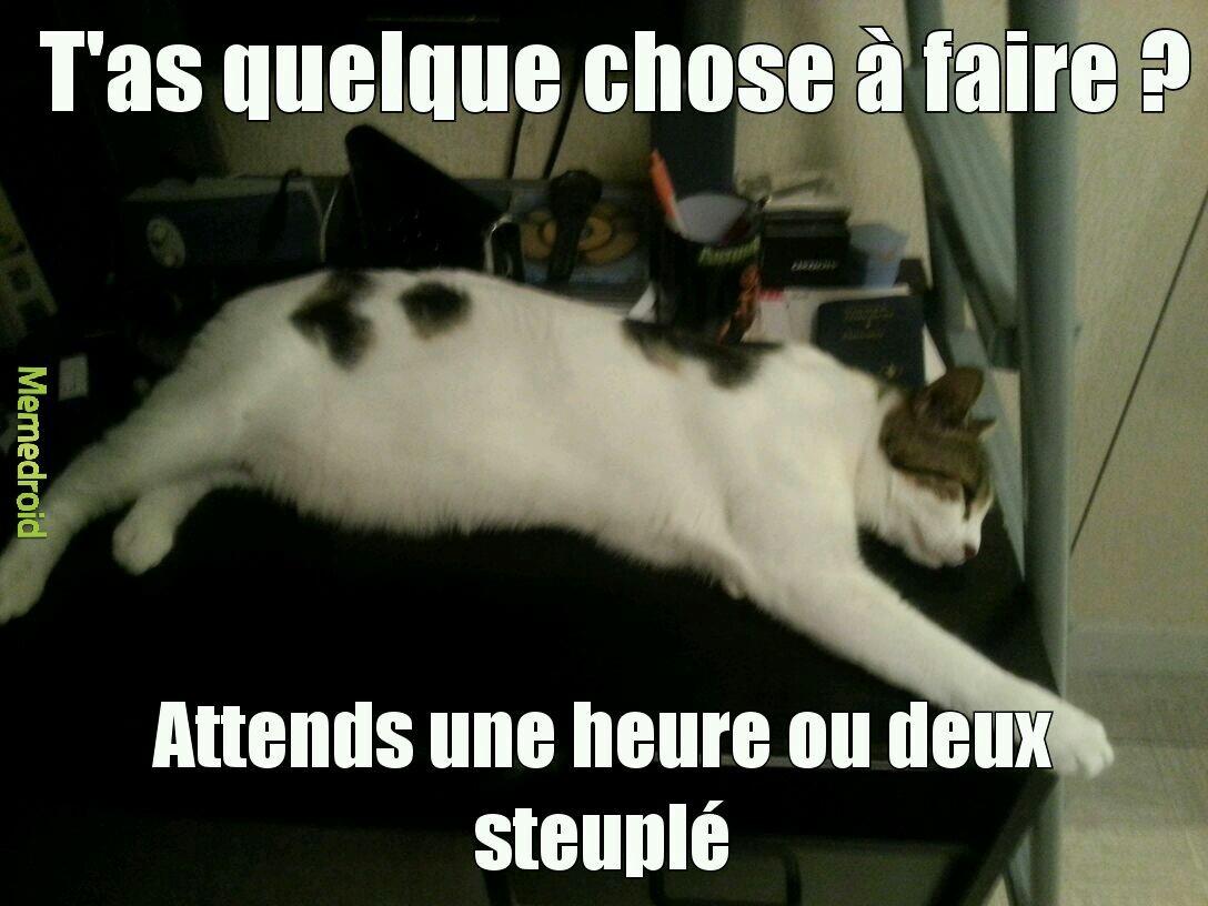 Les chats... - meme