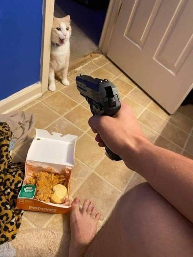 anda laar, gato coshino Qlo - meme
