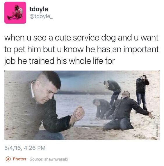 employed good boi - meme