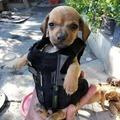 Dog blindado