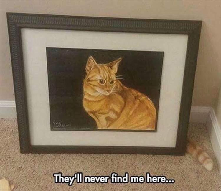 Sneaky kitteh - meme
