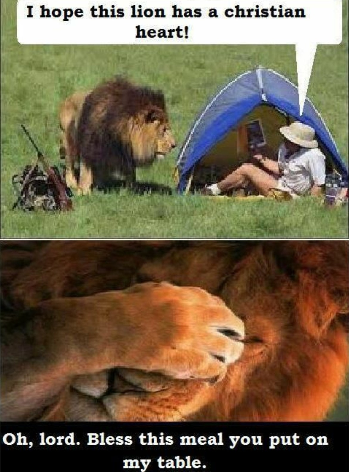I hope this Lion likes and subscribes for a free iPhone 5 - meme