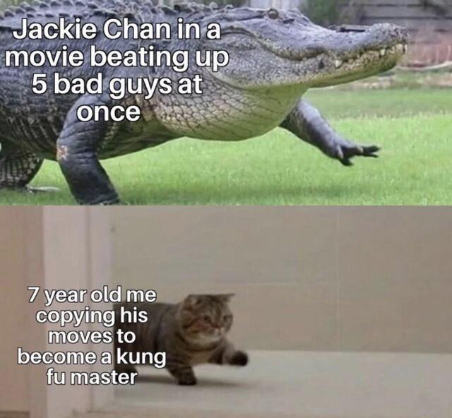 I just freaking love that cat - meme