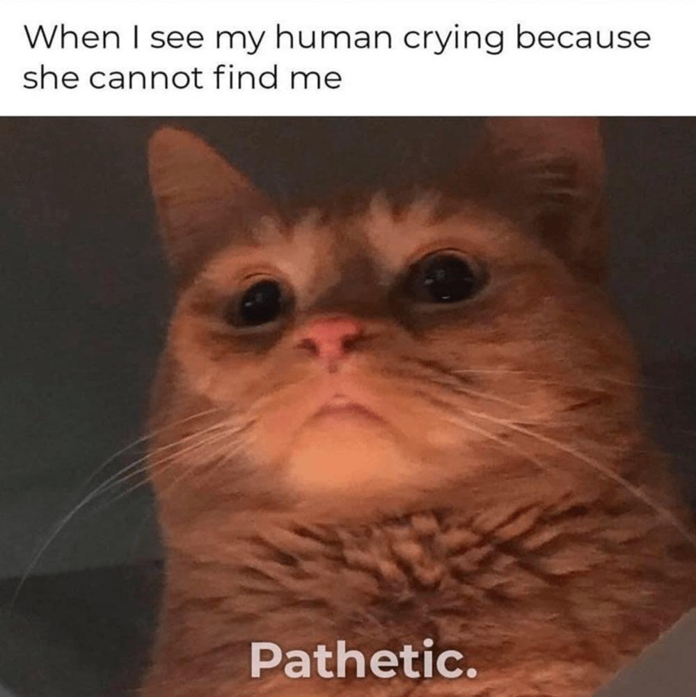 Cat's be like - meme