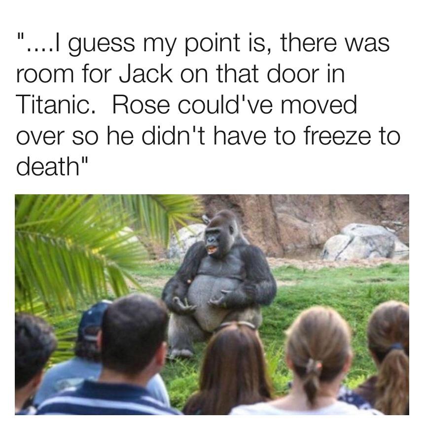 TED Talks Gorilla - meme