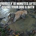 My golden retriever loves that mud